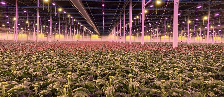 Hệ thống điều khiển ánh sáng Gakon Grow Lighting For Horticulture
