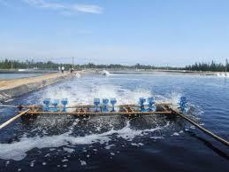 Mật rỉ đường xử lý nước thải công nghiệp