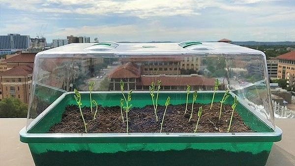 Mỹ phát triển loại đất mới tự 'tưới' nước cho cây trồng